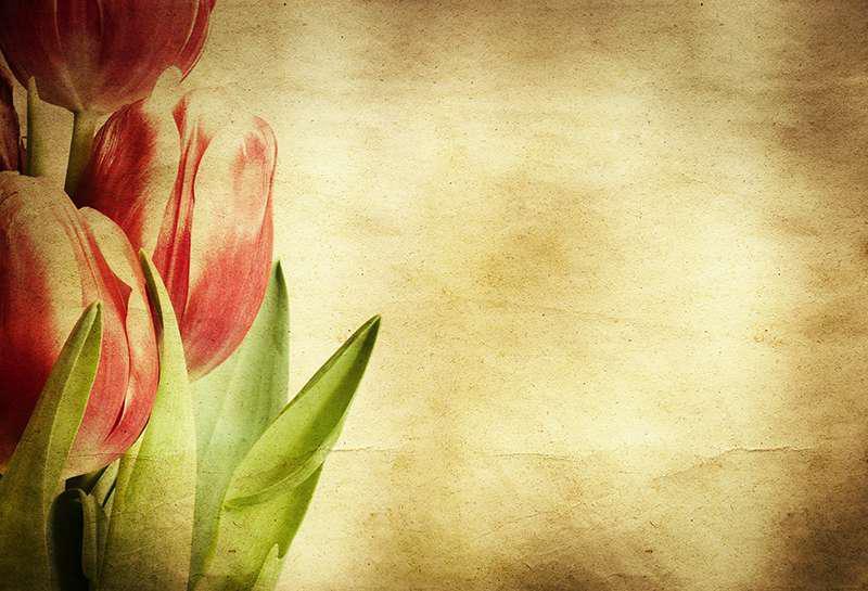Carta da parati Tulipani