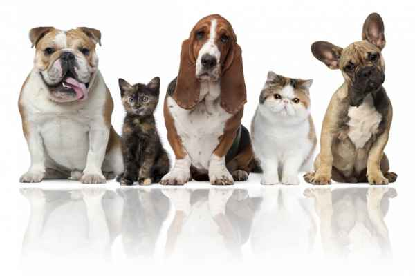 Carta da parati Cani e Gatti