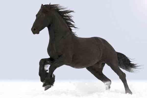 Carta da parati Cavallo Nero