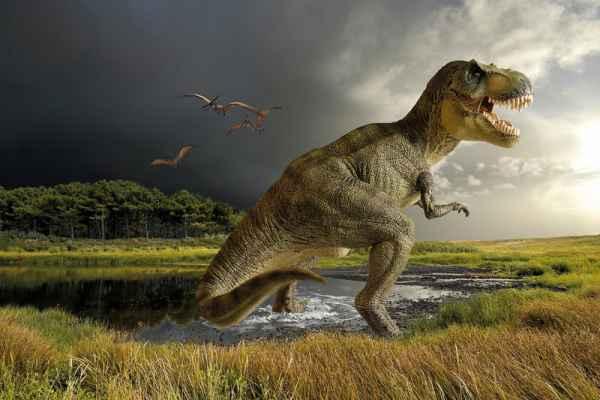 Carta da parati Dinosauro