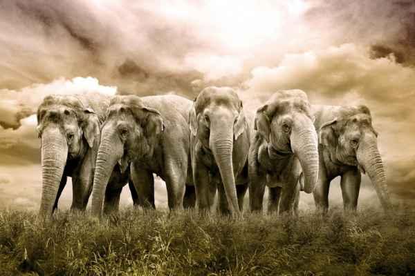 Carta da parati Elefanti 02