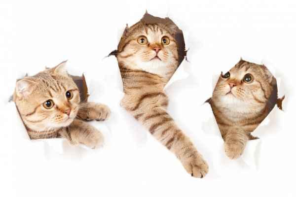 Carta da parati Gatto Curioso