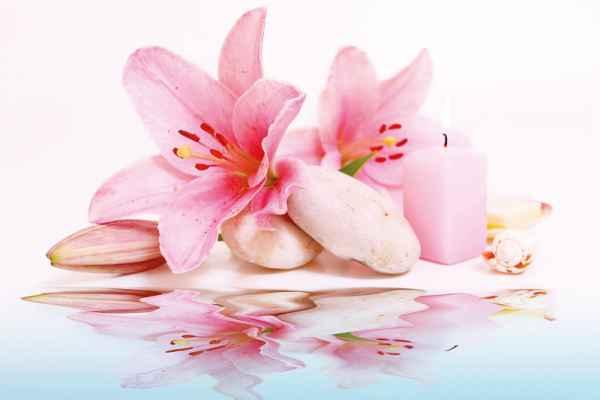 Carta da parati Fiori Rosa