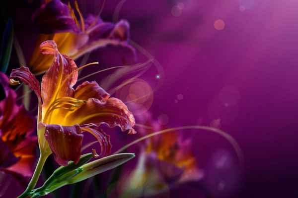 Carta da parati Orchidea 2