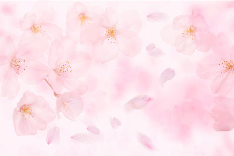 Carta da parati Petali rosa