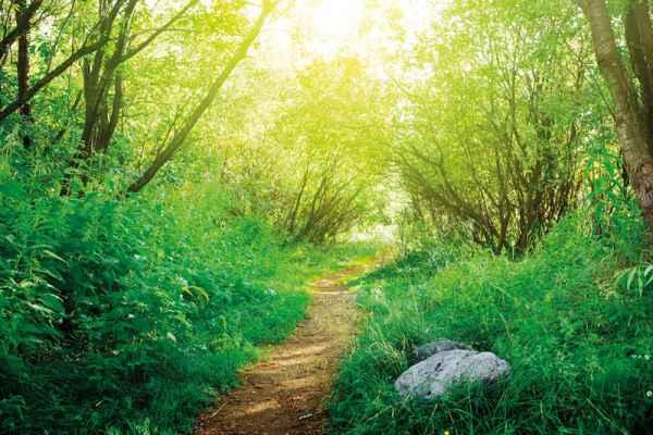 Carta da parati Foresta Interna 1