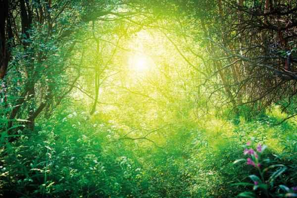 Carta da parati Foresta Interna