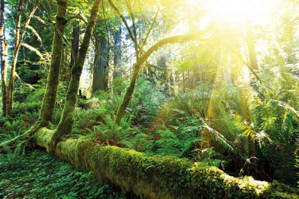Carta da parati Foresta Pluviale