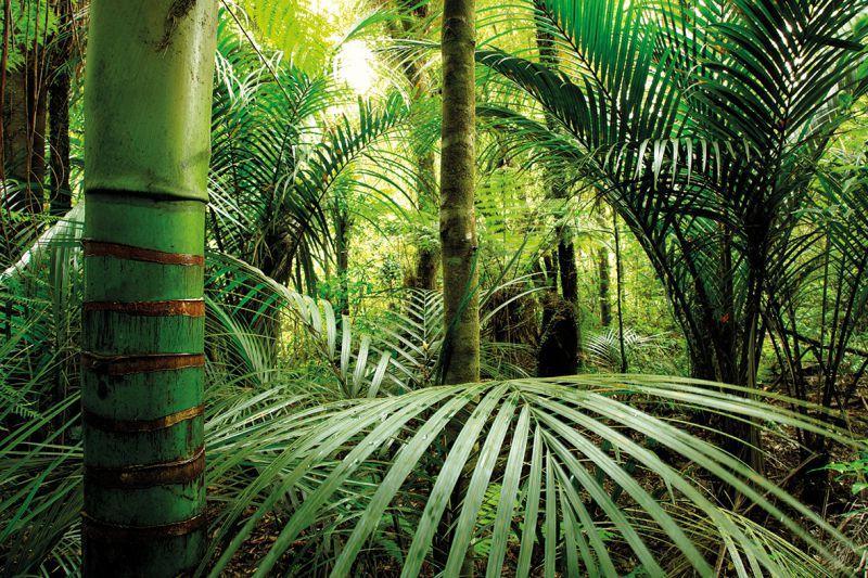 Carta Da Parati Foresta Tropicale : Carta da parati tropicale personalizzazione
