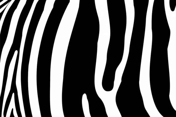 Carta da parati Zebra Pattern