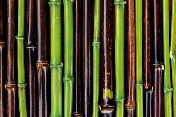 Carta da parati Bamboo Bicolore