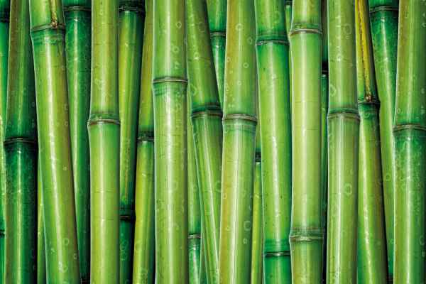 Carta da parati Canne Bamboo 2