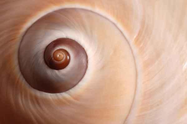 Carta da parati Conchiglia Spirale