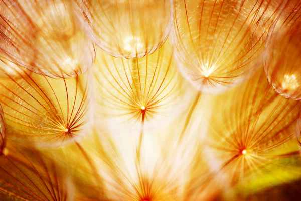 Carta da parati Soft flower