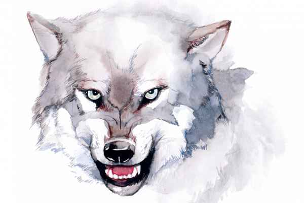 Carta da parati Acquarello lupo