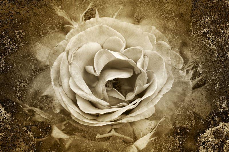 Carta Da Parati Rosa Bianca : Carta da parati rosa bianca personalizzazione